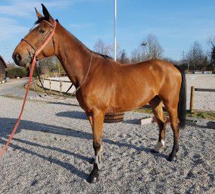 Tintin Deliledurhin